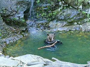 Český Krumlov´s bear Vok during hot summer day, August 2000, foto: Lubor Mrázek